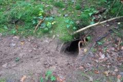 dassenburcht nabij in het bos