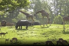 dieren achter in het bos...of is het een foto uit het diernpark in Emmen, ook vlakbij...