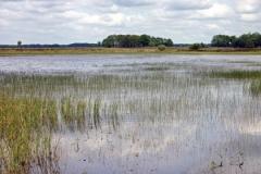 nationaal park Dwingelerveld , geen aanbeveling nodig, maar nog dichterbij is het net zo mooi.
