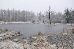 het vennetje, de Stobbenplas in de winter